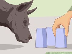 How to Test a Dog's Intelligence
