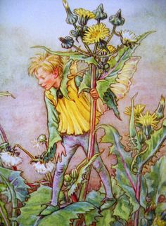 1930s Sow Thistle FAIRY CICELY Mary BARKER by sandshoevintageprint