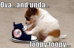 Funny-Puppy-puppies-13009283-499-330.jpg 499×330 pixels