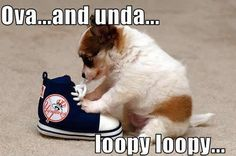 Funny-Puppy-puppies-13009283-499-330.jpg 499×330 pixels