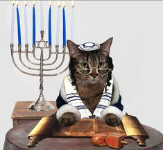 Hanukkah Cat is devout. Animals And Pets, Funny Animals, Cute Animals, Cool Cats, Tiger Striped Cat, Before Midnight, Dog Lady, Cat Hat, Here Kitty Kitty