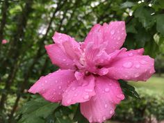 flower , raindrops