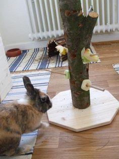futterrolle f r kaninchen und meerschweinchen pl schnasen kaninchen besch ftigung pinterest. Black Bedroom Furniture Sets. Home Design Ideas