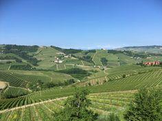 Langhe. Så vackra vinodlingar. Vineyard, Outdoor, Outdoors, Vine Yard, Vineyard Vines, Outdoor Games, The Great Outdoors