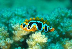 Photo Gallery | Maritim Diving