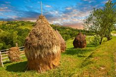 Traditional hay ricks in a wooded field near Sighlet, Maramures, Transylvania -- Reminds me of the writings of my favorite author, Thomas Hardy Around The World In 80 Days, The Past, Around The Worlds, What A Wonderful World, Pictures Images, Romania, Wonders Of The World, Red Roses, Places To See