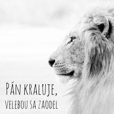 Lion, Animals, Shopping, Leo, Animales, Animaux, Lions, Animal, Animais