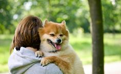 Why Doesn't My Dog Like To Be Held? | Care2 Healthy Living