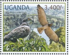 Beaudouin's Snake Eagle stamps - mainly images - gallery format