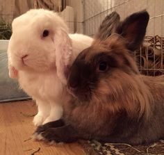 The Bunny Brothers ❤️ Duncan and Dexter on D&D by Inger Johanne :)