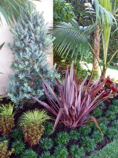 Tropical Garden - like the colours and the overall tropical effect using some sub tropical plants