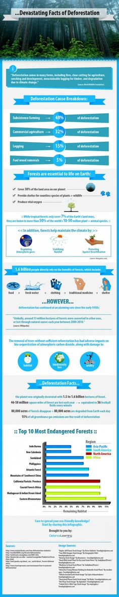 Devastating facts about deforestation Infographic Go Green Environment, Way To Go, Go Green Go, Save Green Deforestation Poster, Rainforest Deforestation, Rainforests, Ap Human Geography, Global Citizenship, Classroom Images, Green Environment, Environmental Education, Greenhouse Gases