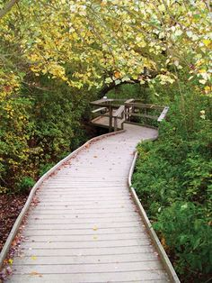 Walking Trails - Guide with more than 75 trails- Cape Cod