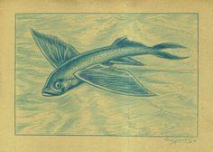 Nationaal Historisch Museum - De Vliegende Vis - Cypselurus