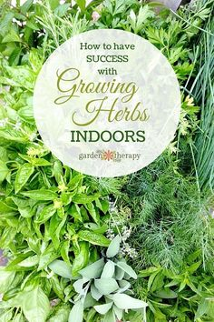 Learn how to be successful when growing Herbs Indoors