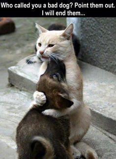 Aww cat and dog besties.