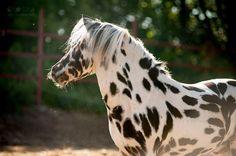 (96) Olga Itina Equestrian Photography - Timeline