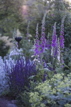 I brytpunkten mellan dag och natt, eller natt och dag händer det magiska ting i trädgården. Man kan vakna tidigt, gnugga sig i ögonen och morgontrött kika ut genom fönstret. Är man tillräckligt vak…