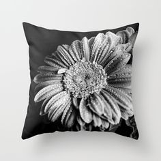 Gerbera black and white  Throw Pillow #Gerbera, #daisies, #blackandwhite, #photography, #nature, #drops, #water,