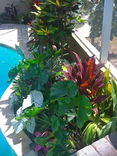 The Ultimate Revelation Of Tropical Landscaping 57