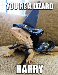 Funny Harry Potter Lizard Wizard