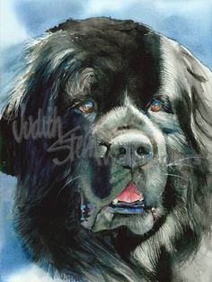 NEWFOUNDLAND Dog Pet Portrait Watercolor Painting Print by k9stein, $22.50