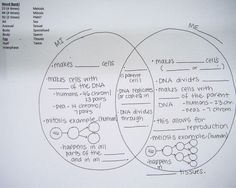 Copy of venn diagram google drawings google classroom mitosis venn diagrams and kids worksheets on pinterest ccuart Image collections