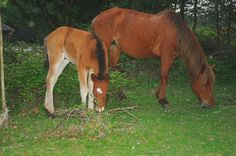 Only Foals and Horses......