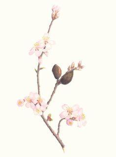 Αποτέλεσμα εικόνας για almond blossom  tattoos