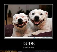 DUDE      (Staffordshire Bull Terriers are the BEST!)