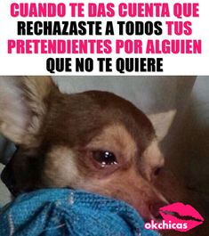 Paque nacía! Funny Memes, Hilarious, Spanish Humor, Pretty Images, Bff, My Photos, Cool Stuff, Random, Truths