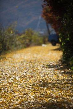 Fall in Korea !!