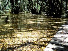 Bosque inundado de Lago Puelo, patagonia Argentina