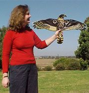 Hawk Bird Scarer - Control pest birds in your crops or garden with this lifelike hawk replica.