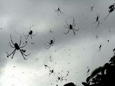 Spiders why spiders. Why couldn't it have been Follow the butterflies