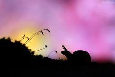 Sunrise Friends by AimishBoy ., via 500px
