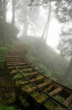An abandoned railway runs through a clouded forest on Tai Ping Shan Mountain, a popular wilderness area in northern Taiwan. Neil Wade Photography.