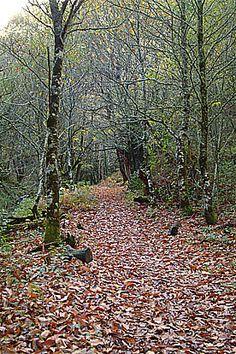 Ruta de la Cascada de la seimeira, Santa Eulalia de Oscos, Reserva de la Biosfera Oscos-Eo, Asturias