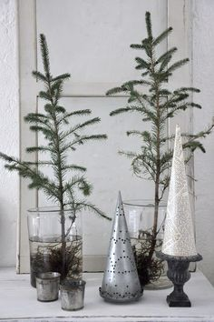 hmmm ~ I have some white pine saplings in the woods that I would love to pot up and baby for a couple years. Wonder if I could bring them in for a couple weeks this Christmas without hurting them?