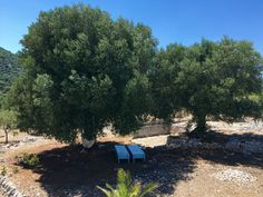 Bed under the olive trees Vacation in Puglia www.fiancoafianco.eu