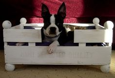 crate to dog bed! I'll be on the look out for a wooden crate!