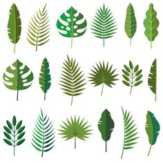 Choose from 60 top Palm Leaf stock illustrations from iStock. Find high-quality royalty-free vector images that you won't find anywhere else. Illustration Photo, Leaf Illustration, Illustrations, Free Vector Graphics, Free Vector Art, Plant Icon, Palm Tree Vector, Leaf Clipart, Leaves Vector