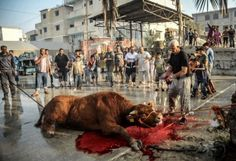 Today, October 5(dates may vary), the festival of sacrifice has started in Turkey, Pakistan and Bosnia and Herzegovina. The festival is also called the Fe...