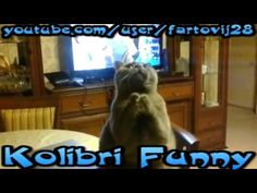 """""""Cats beggars Best"""" Cat Vines The Best Cat Vine Compilation 2014 Vine Compilation, Best Funny Videos, Cool Cats, Vines, Dogs, Animals, Animales, Animaux, Animal Memes"""