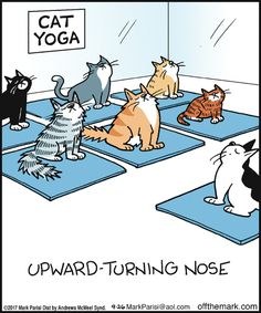 Off the Mark by Mark Parisi for September 2017 cat yoga – Off the Mark by Mark Parisi September 2017 I Love Cats, Cute Cats, Funny Cats, Funny Animals, Cute Animals, Funny Horses, Cats Funny Sayings, Cat Fun, Adorable Kittens