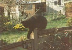 To the rest of us, a fence rail is no place to walk, but to a cat.........