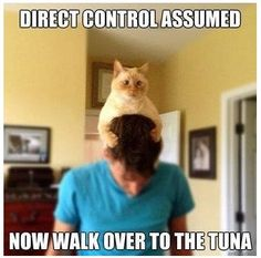 Mine don't have to assume direct steering control to get what they want!! (Although no Tuna folks – not good for the kitties.)