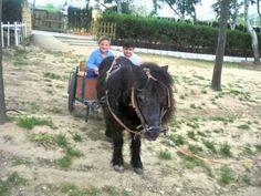 UN DÍA EN LA GRANJA ESCUELA Horses, Animals, Farmhouse, Classroom, School, Naturaleza, Animales, Animaux, Animal