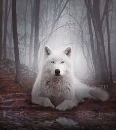 Night of the Wolf by lady-amarillis Wolf Love, Beautiful Creatures, Animals Beautiful, Cute Animals, Wolf Pictures, Animal Pictures, Malamute, Wolf Husky, Arctic Wolf