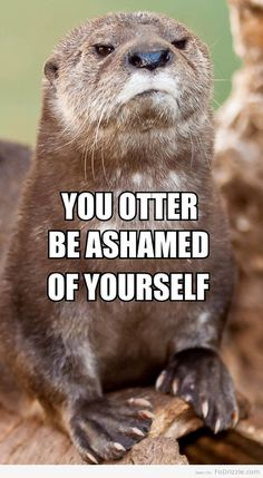 You Otter Be Ashamed of Yourself!